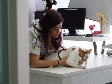 How to Know That Your Pet Requires a Check-up?   Mount Pleasant Vet   Scoop.it