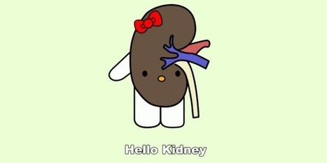 The math of organ donation: kidneys are an NP-hard problem | Amazing Science | Scoop.it