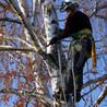 Abrasive Tree Service