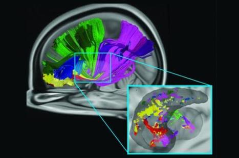 New Way Several Brain Areas Communicate Identified | Neuroscientist News | Science technology and reaserch | Scoop.it