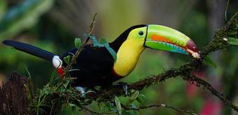 Le Costa Rica, paradis vert et modèle pour la COP21 | Chronique d'un pays où il ne se passe rien... ou presque ! | Scoop.it