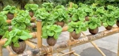 The Origin Of Hydroponics | Sustained Living | aeroponics | Scoop.it
