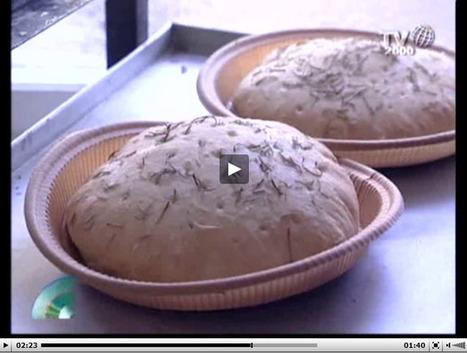 Cose dell'altro pane: come nascono e dove vengono prodotte | FreeGlutenPoint | Scoop.it