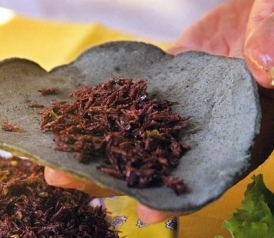 Why You Should Love Grasshopper Tacos and Kelp Pasta - Slate Magazine | Vertical Farm - Food Factory | Scoop.it