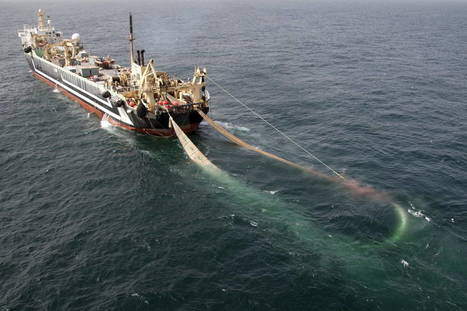 Legal query raised over super trawler largest ever to fish Australian Waters | OUR OCEANS NEED US | Scoop.it