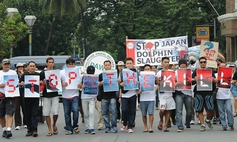 Dolphin butchering time again in Japan – sparks protest in Phillippines | GarryRogers NatCon News | Scoop.it
