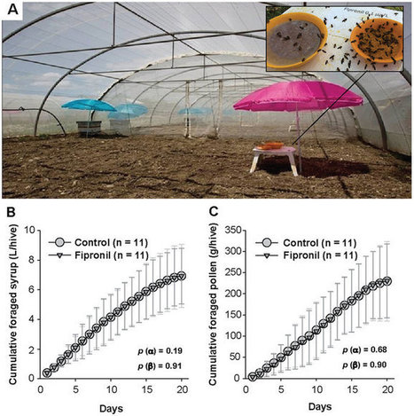 Drone exposure to the systemic insecticide Fipronil indirectly impairs queen reproductive potential | La recherche en apiculture | Scoop.it