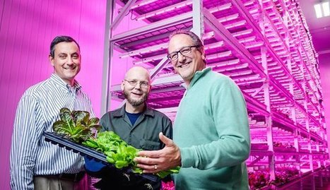 LED bulbs could foster an urban farming revolution | Vertical Farm - Food Factory | Scoop.it