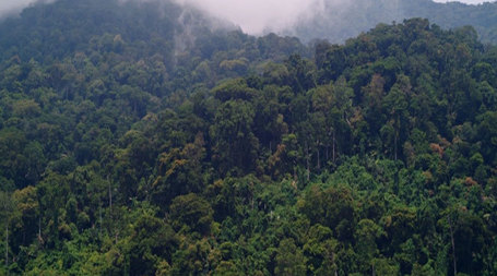 Forests: Failure to protect forests will lead to huge financial losses | Climate Change, Agriculture & Food Security | Scoop.it