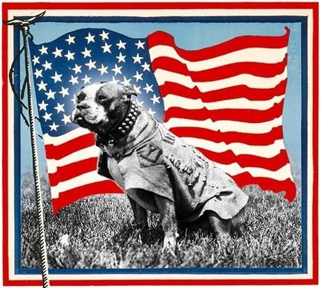 Meet Sergeant Stubby, America's Original Dog of War - Slate Magazine | Molosser Dog World | Big Dogs, Real Talk . . . No Fluff. | Scoop.it