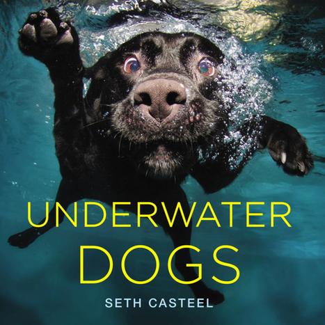 Je vous pose ça là #7 : #storytelling #photo #Underwaterdogs | BLOG La faille spatio-temporelle de Tamala75 | Scoop.it