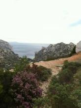 °°Bruyères et Calanques°° : °°lejardindeclaire°° | Séjours nature dans le Sud de la France: Garrigue et Calanques | Scoop.it