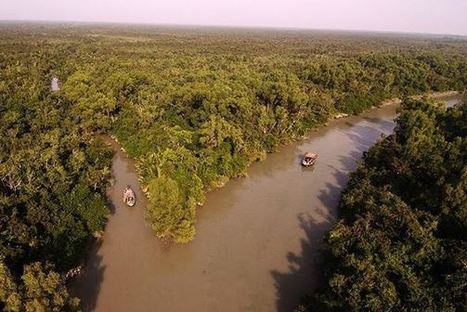 Saving the Sundarbans ~ The world's largest mangrove forest and home to the endangered Royal Bengal tiger. | GarryRogers Biosphere News | Scoop.it