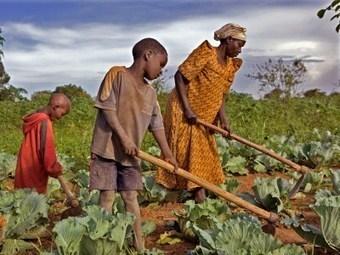 RDC : La CONAPAC plaide en faveur de l'augmentation du budget alloué  à l'agriculture | Questions de développement ... | Scoop.it