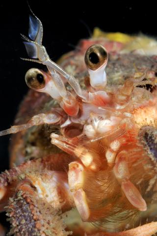 Directive-cadre stratégie pour le milieu marin (DCSMM) : L'évaluation initiale des eaux marines est disponible. | Sale temps pour la planète | Scoop.it