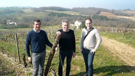 Les Vignerons de Buzet sont «bee friendly»   Chimie verte et agroécologie   Scoop.it