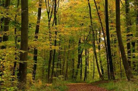 Le prix des forêts françaises repart timidement à la hausse - Les Échos | Filière bois : Filière d'avenir | Scoop.it