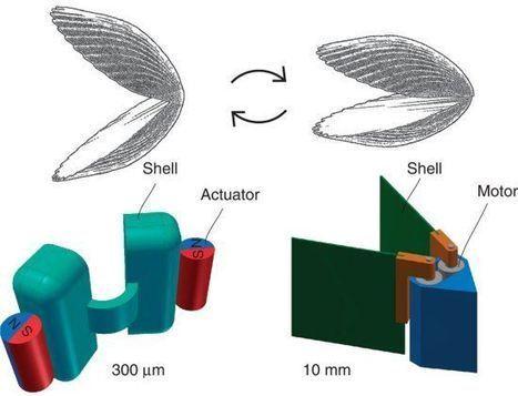 Microssubmarino para aplicações médicas usa conchas para mover-se | tecnologia s sustentabilidade | Scoop.it