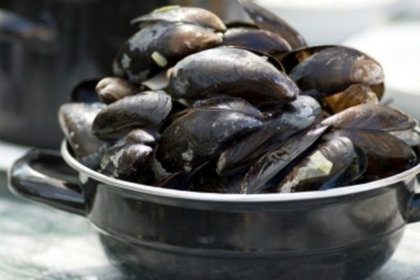 Dutch want their mussels free from micro-plastic litter, call on EU to act | OUR OCEANS NEED US | Scoop.it