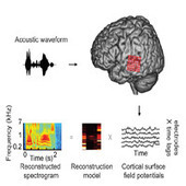 Inside The Mind's Ear [Video] | Cognitive Science | Scoop.it