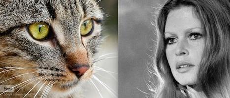 Brigitte Bardot Slams Australia's Plan To Kill 2 Million Feral Cats ... - Huffington Post | Cats Meow | Scoop.it