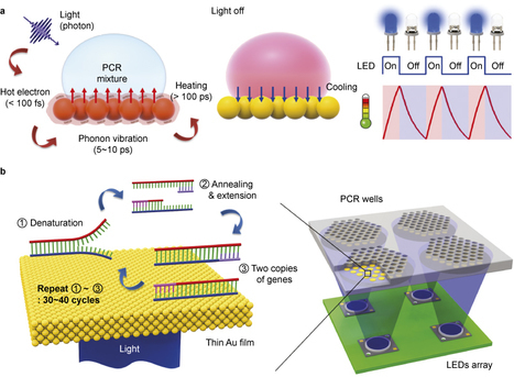 Photonic heating and cooling with light leads to ultrafast PCR-based DNA diagnostics | Amazing Science | Scoop.it