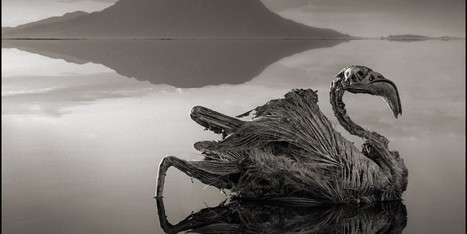 PHOTOS: Deadly Lake Turns Animals Into 'Statues' | Change | Scoop.it