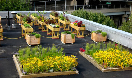 An Introduction to Eco-Friendly Green Roofs | GreenRoofs | Scoop.it