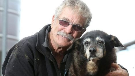 World's 'oldest dog' dies at 30 in Australia after going to sleep in her basket | Health & Safety in the Workplace | Scoop.it