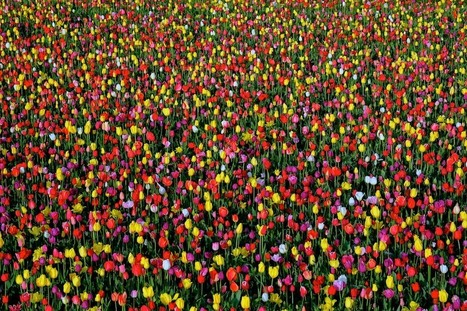 tulip festival + fuji = COLOR! | VanEarl Photography | Fujifilm X Series APS C sensor camera | Scoop.it
