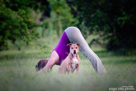 Five essential yoga poses for cyclists | Sporting life | Scoop.it