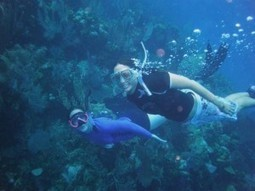 What Is Snorkeling | Scuba Diving & Snorkeling | Scoop.it
