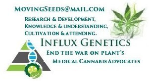 Influx Genetics on tour. | Most Wanted Seeds at Influx Genetics on tour. | Scoop.it