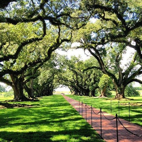 camille andersen | Oak Alley Plantation: Things to see! | Scoop.it