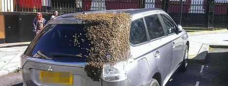 VIDEO. Des milliers d'abeilles recouvrent une voiture à la recherche de leur reine | Biodiversité | Scoop.it