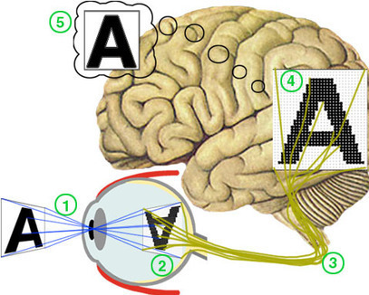 Vision and Light-Induced Molecular Changes | Social Neuroscience Advances | Scoop.it