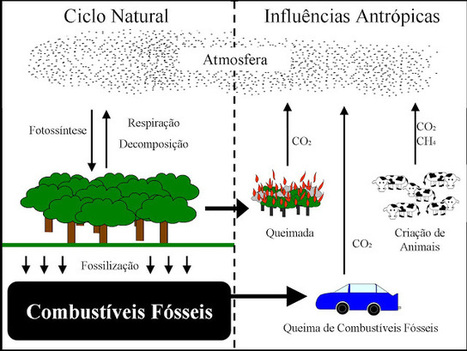 Biologia no Ensino Médio: Ciclos biogeoquímicos - Ciclo do Carbono (C) | Aulas BIO | Scoop.it