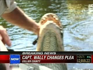 Everglades City's Captain Wally pleads no contest to feeding an alligator (VIDEO)   The Billy Pulpit   Scoop.it