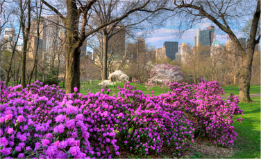 Top 10 Spring Flowers Spots In Central Park | Central Park | Scoop.it