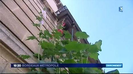 Végétalisation des rues de Bordeaux - France 3 Aquitaine | Actu de l'Aménagement Urbain | Scoop.it