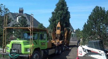 Affordable Large Extraordinary Service Of Tree Moving in Service In  Oswego | Aileen tree service | Scoop.it