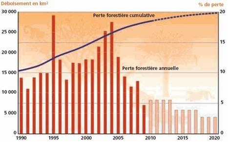 Déforestation : causes et conséquences - notre-planete.info | SVT : l'homme responsable de son environnement | Scoop.it