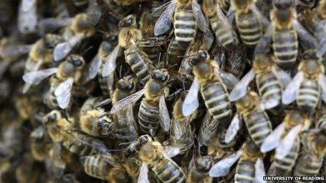 EU bee shortage threatens crops | Econ1 @ Priestley | Scoop.it