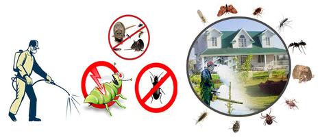 Pest Control Dubai | Kobonaty deals and discounts coupons in Dubai | Scoop.it