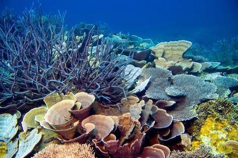 The ocean is the world's 7th largest economy - UPI.com | Natural Capital | Scoop.it