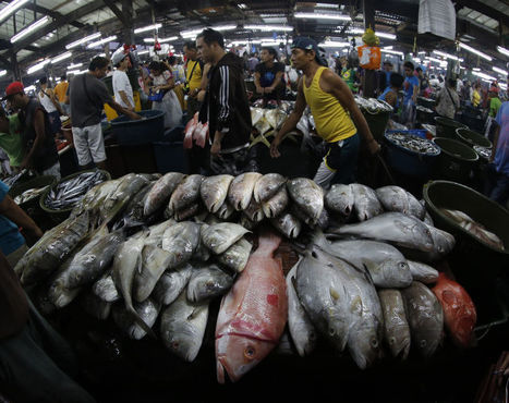 "Dozens of Philippine fish species in danger – study (""59 coral reef species no longer found"") 