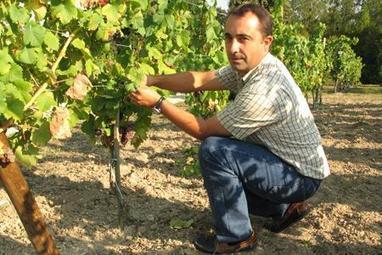 Cognac : un conservatoire cherche des cépages anciens | Viticulture | Scoop.it