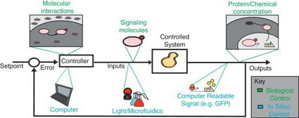Building robust functionality in synthetic circuits using engineered feedback regulation | SynBioFromLeukipposInstitute | Scoop.it
