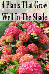 4 Plants That Grow Well In The Shade | Green Art Cafe | Scoop.it