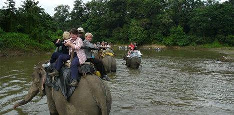 Jungle Safari in Nepa   Adventure Trekking in nepal   Scoop.it